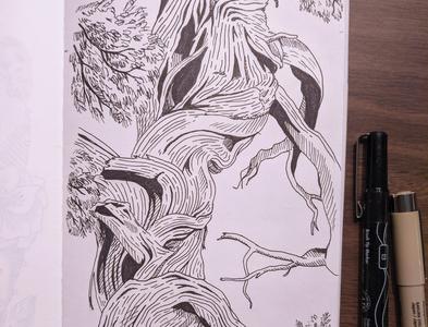 Western cedar tree drawing