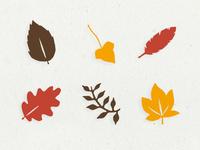 Barnes & Noble | Fall Illustrations