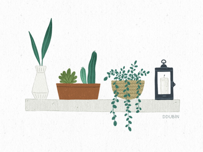 Plants drawing illustration cactus leaves green home nature pots plants