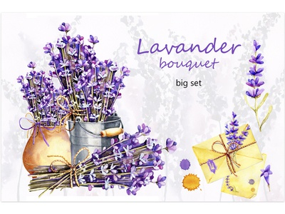 Lavender. Watercolor illustration.
