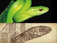 illustrator-Snake
