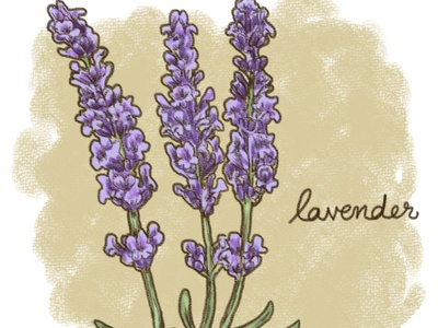 Calming Plants - Lavender