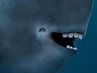 Doofus Whale