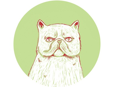 moody persian cat