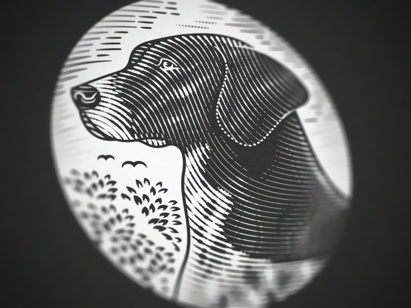 German Shorthaired Pointer (Engraving Close up)