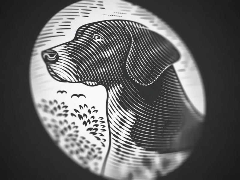 German Shorthaired Pointer (Engraving Close up) woodcut scratchboard illustrator line art etching peter voth design engraving vector illustration