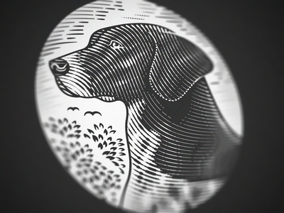 German Shorthaired Pointer (Engraving Close up) woodcut scratchboard illustrator line art etching peter voth design engraving vector illustration