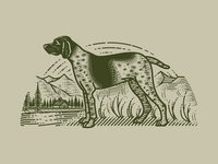 German Shorthaired Pointer (Molly Jogger)