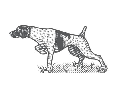 German Shorthaired Pointer vector art line art etching peter voth design engraving vector illustration