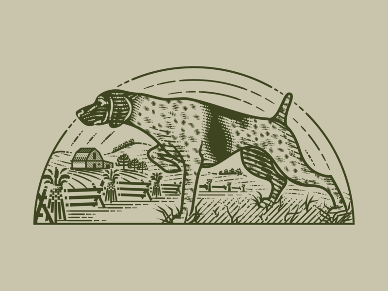 German Shorthaired Pointer pt.II line art packaging etching peter voth design engraving vector illustration