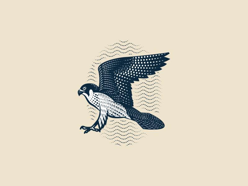 Falcon Engraving line art illustrator etching peter voth design engraving logo vector illustration