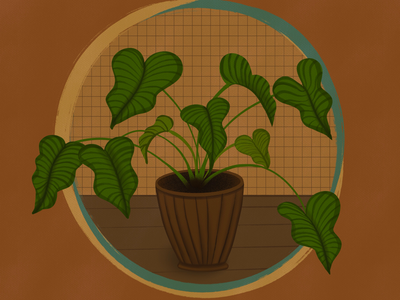 Plant home house green brown plant illustration procreate
