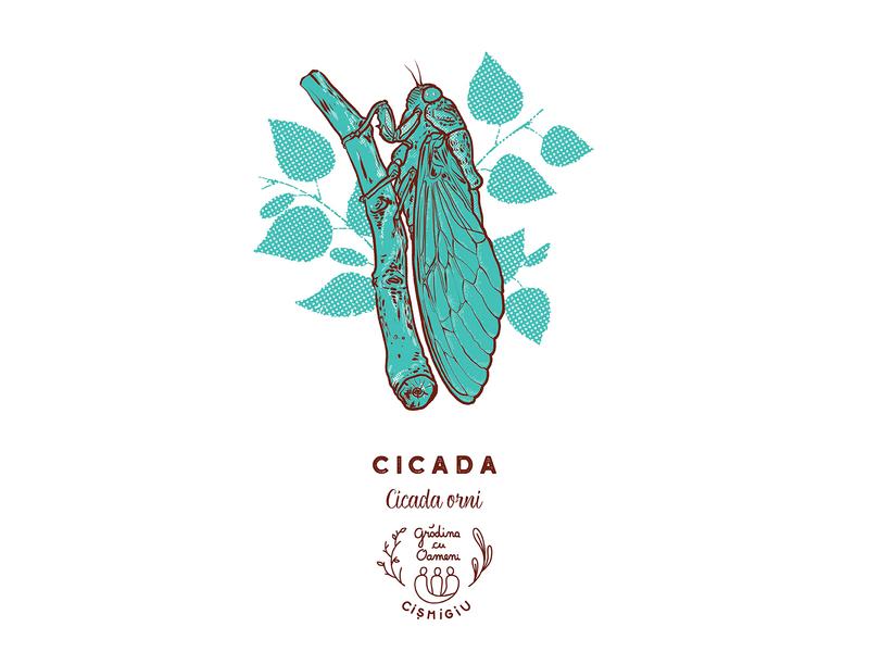 Cicada - Cicada orni educational cismigiu insects totebagdesign screenprinted screenprint cicada orni cicada insect georgianul georgian constantin illustration anotheroutsider