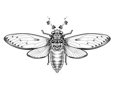 Cicada illustration georgian constantin anotheroutsider tattoo artist tattoo design tattoo art tattoo dotwork stipple skull illustration cicada tattoo cicada illustration cicada design skull wings insect cicada
