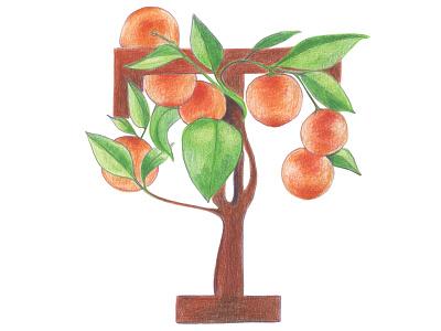 T is for Tangerine kids illustration colored pencils typography art alphabet fruit letter handlettering fruit typography hand drawn illustration