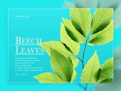 Hero Leaves gradient flat design graphic
