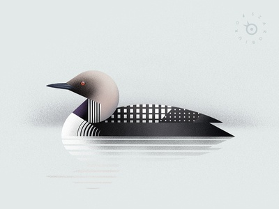Pacific loon patterns art deco modern digital painting plate natural history animal geometric nature ornithology diver loon illustration bird