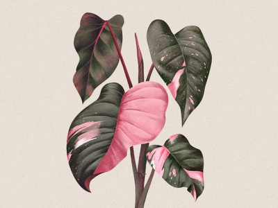 Pink Princess tropical realistic painting jungle plant illustration commission digital painting philodendron pink princess nature