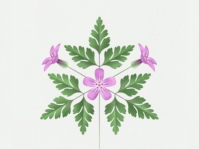 Herb-Robert botany plant flower modern natural history geometric illustration nature