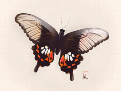 Butterfly.2