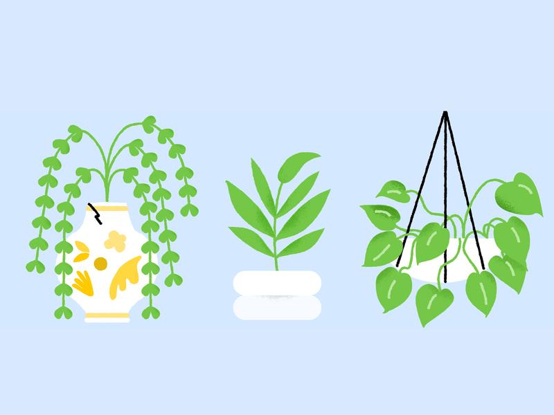 fronds nature leaf plant texture illustration plants