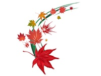 Vector Maple Leaves Illustration