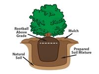 Vector Planting Diagram
