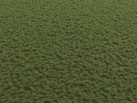 Grass; Dirt Ground