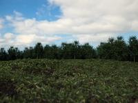 Grass; Trees; Sky