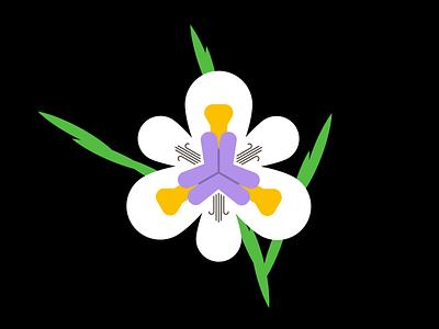 "The ""Fairy"" Iris nature illustration vector flower nature"