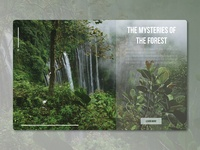 Info Card - Forest