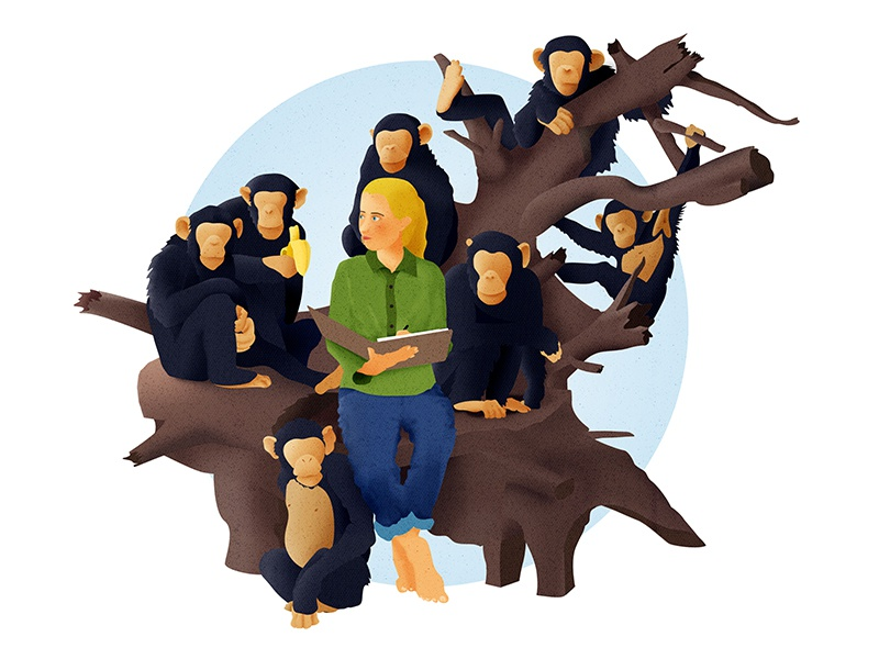 Jane Goodall illustration tanzania apes science research anthropology africa chimps jane goodall
