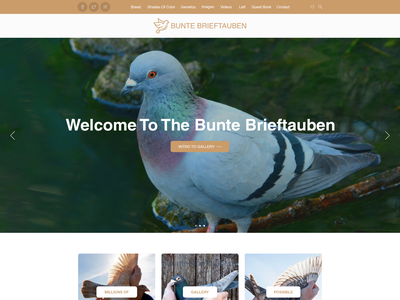 Unique Photo Wrodpress Blog Design for my Rare colored Racing ho wordpress modern simple minimalist clean pigeon photography