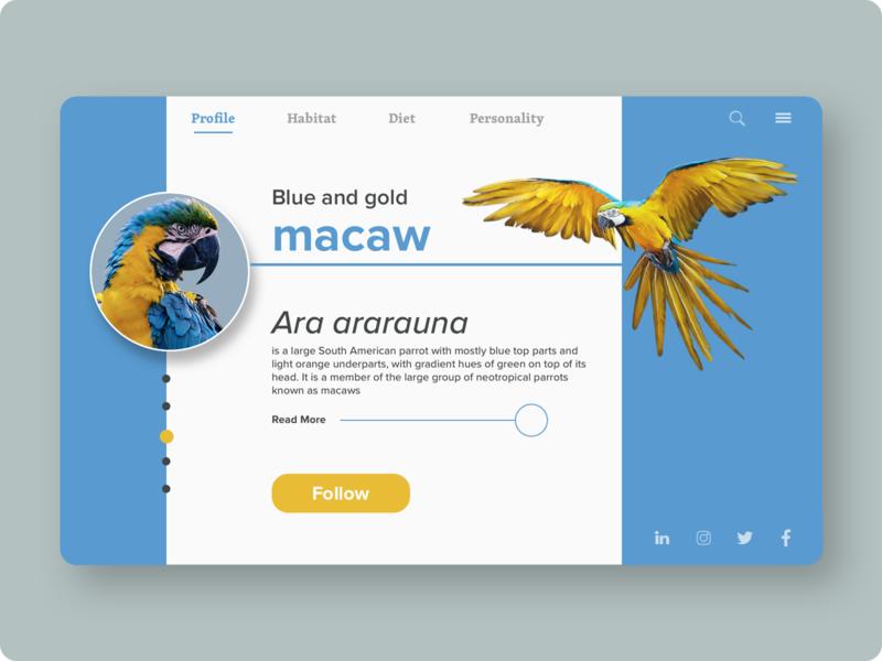 DailyUI #006 - Profile ui challenge ui design nature macaw gold blue parrots bird web ui user profile followers profile page profile 006 daily ui 006 daily ui challenge daily ui