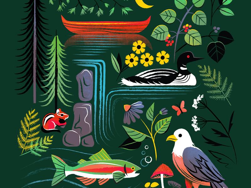 The Adirondacks flat lay wildflower berries wilderness loon eagle rainbow trout chipmunk pine canoe adirondacks icons illustration