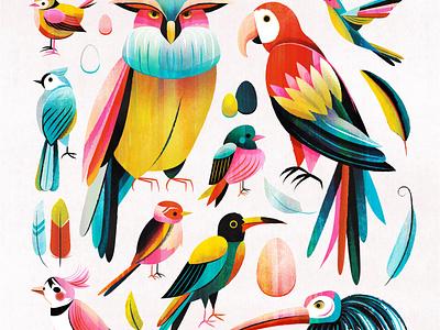 Pretty Birds feather eggs bluejay hummingbird parrot owl bird illustration