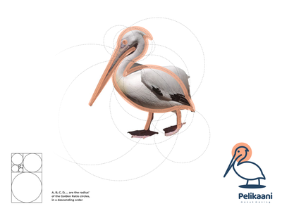 pelikaani logo typography ux ui logodesign vector corporate branding design logo illustration branding