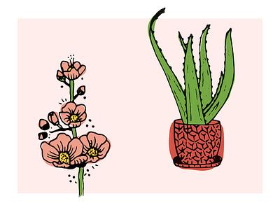 Desert Cuties sketch illustration aloe succulent desert flower