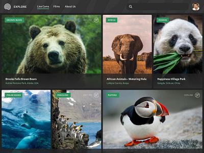 Explore main feed animals ui gallery environment