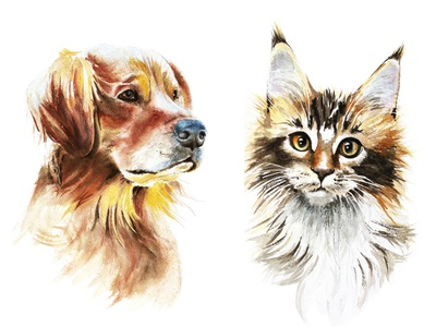 Watercolor Illustrations: Golden Retriever and Maine Coon design illustration golden retriever labrador main coon cute animals illustration for t-shirt pet golden retriever pet watercolor animals watercolor clipart watercolor illustration watercolor art watercolor painting