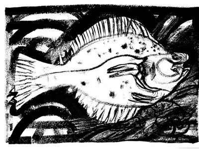 Platichthys flesus fish expressionism illustration