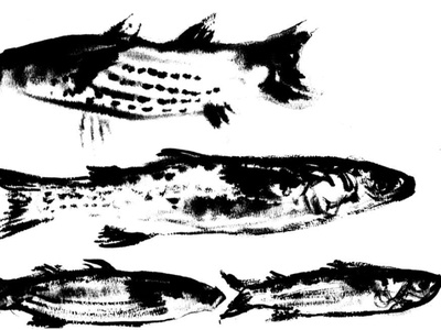 Sprattus sprattus fish expressionism illustration