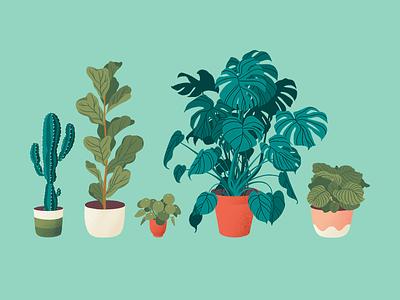Collection of plants ipad procreate illustration design leaf green pot calathea ficus monstera pilea cactus plant