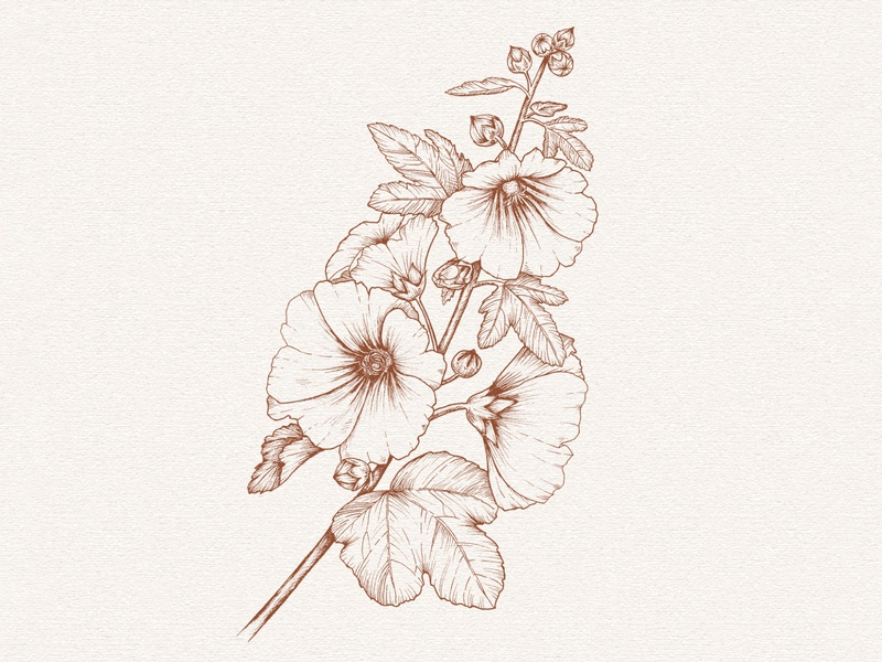 Hollyhock drawing realistic floral botanical illustration ink pen drawing