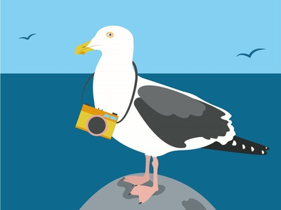 Travelling seagull animals childrens book blue hello camera vector illustration bird seagulls seagull travelling app travelling