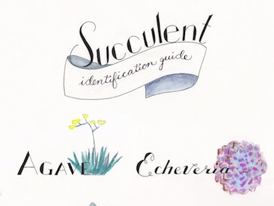Succulent Identification Guide painting watercolor hand type type illustration illustrator lettering typography hand lettering hand-lettering