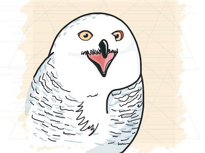 Screaming Owl owl illustration vector illustration vector