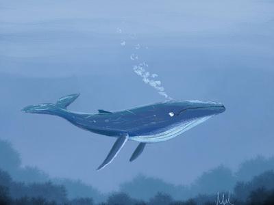 Shadow Blue Whale drawing digital illustration shadowblue