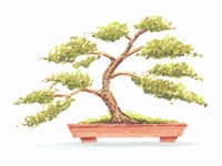 Bonsai marker sketch