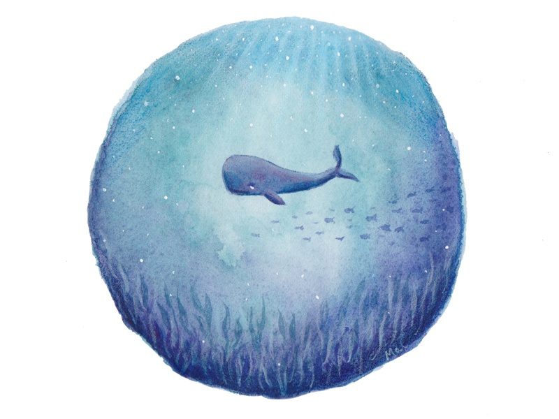 Whale by Mal Webster on Dribbble